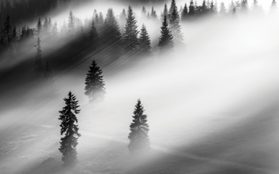 Cutting through the fog